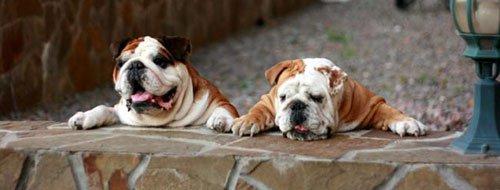 Татьяна панкратова о породе собак